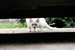 Slik fjerner Cat urin fra Vinyl bil interiør